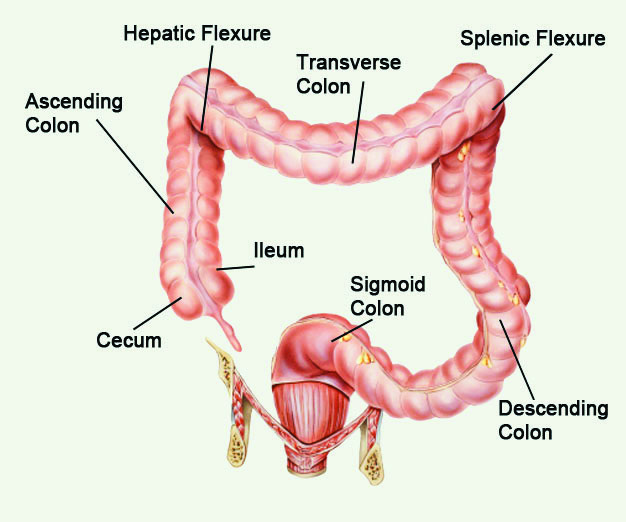Screen For Correct Colorectal Polyp Icd 10 Coding Aapc Knowledge Center