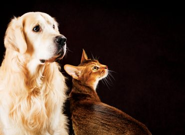 Cat vs. Dog: Which Is a Coder's Best Friend?