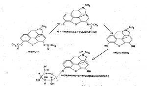 DrugTesting_Figure6