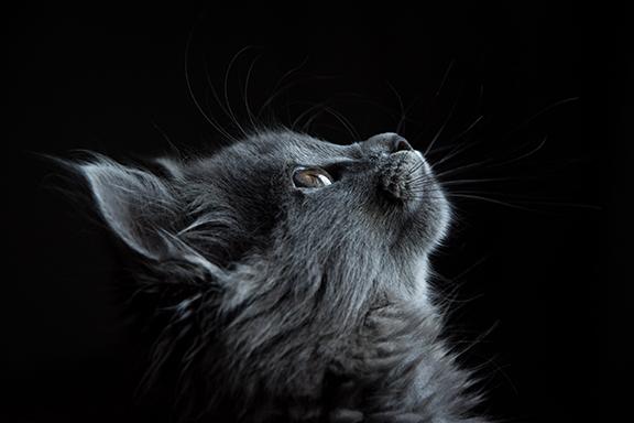 cat_pet_opioid