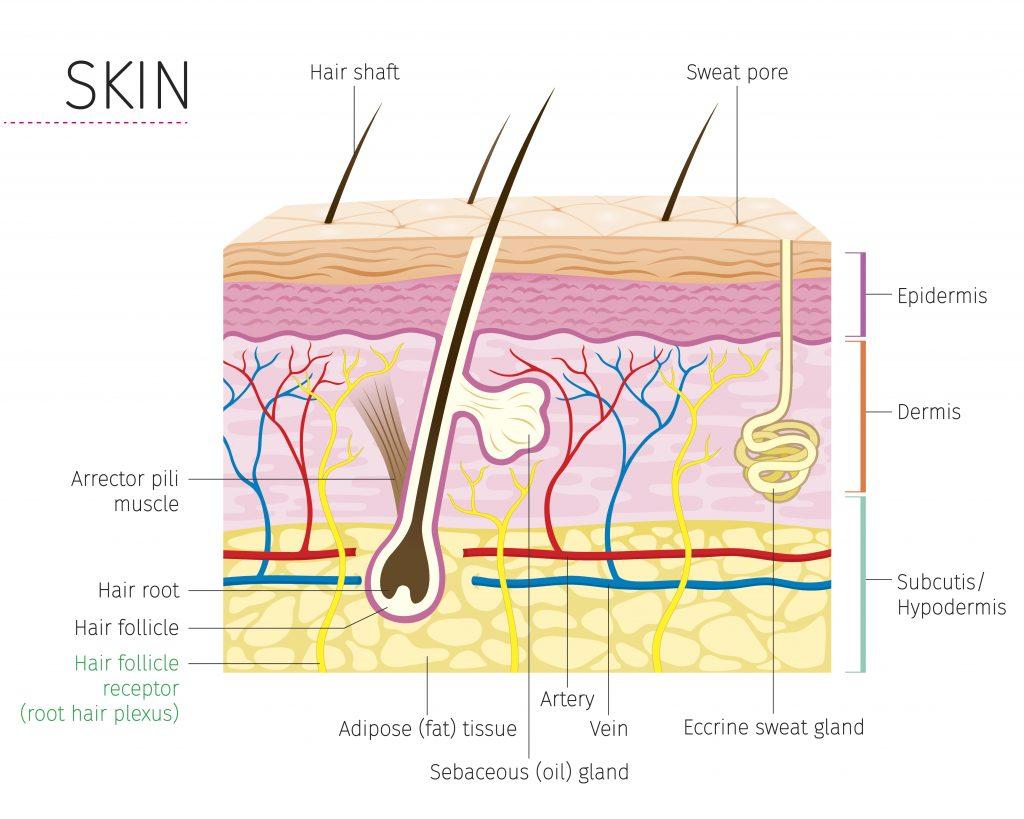 skin procedure coding